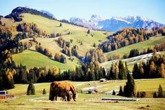 Twee paarden op het gebied royalty-vrije stock afbeelding