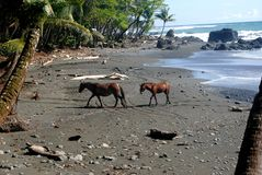 Twee paarden op het strand stock afbeelding