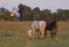Twee paarden op medow royalty-vrije stock afbeelding