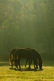 Twee paarden in vreedzame harmonie Royalty-vrije Stock Afbeeldingen