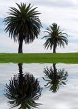 Twee palmen Stock Afbeeldingen