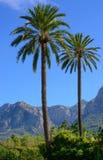 Twee palmen Royalty-vrije Stock Afbeeldingen