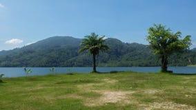 Twee Palmen of bomen op een meer met heuvels op achtergrond Stock Fotografie