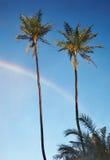 Twee palmen en regenboog stock afbeeldingen