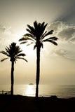 Twee palmen in het strand stock afbeeldingen