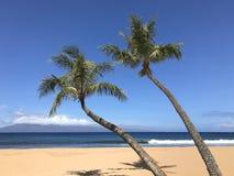 Twee Palmen Hoekig over een Strand op Sunny Day royalty-vrije stock afbeeldingen