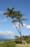 Twee palmen in Maui Royalty-vrije Stock Afbeelding