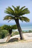 Twee palmen met oceaan Stock Fotografie