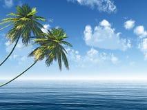 Twee palmen op zee kust Stock Afbeeldingen
