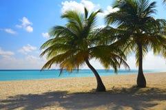 Twee palmen zijn op een tropisch strand royalty-vrije stock afbeelding