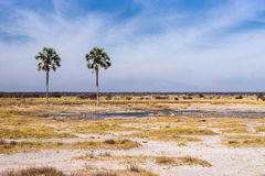 Twee Palms waterhole in Etosha national park. Namibia, Africa Royalty Free Stock Photos