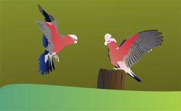 Twee Papegaaien royalty-vrije stock fotografie