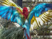 Twee papegaaien die voor de beste plaats vechten royalty-vrije stock afbeeldingen