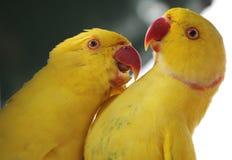 Twee Papegaaien in Kuala Lumpur Bird Park Stock Fotografie