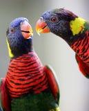 Twee Papegaaien in Kuala Lumpur Bird Park Stock Foto's