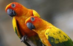 Twee Papegaaien in Kuala Lumpur Bird Park Royalty-vrije Stock Afbeeldingen