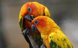 Twee Papegaaien in Kuala Lumpur Bird Park Stock Afbeelding