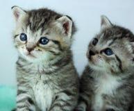 Twee pasgeboren katjes stock afbeeldingen