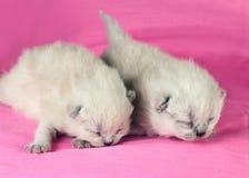 Twee pasgeboren katjes stock foto