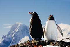 Twee pinguïnen het dromen Royalty-vrije Stock Afbeelding
