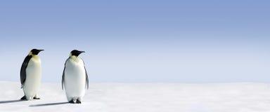 Twee pinguïnenpanorama Royalty-vrije Stock Afbeelding