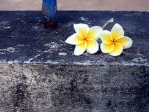 Twee Plumeria bloem royalty-vrije stock afbeeldingen