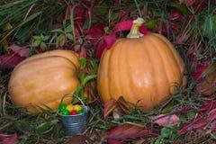Twee pompoenen en suikergoed van Halloween op het gras Stock Fotografie