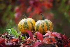 Twee pompoenen op een onduidelijke natuurlijke achtergrond Autumn Time Stock Foto