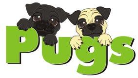 Twee pugs met woord Stock Foto's