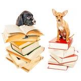 Twee puppy die met boeken stellen stock afbeelding