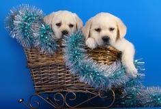 Twee puppy in een mand met het klatergoud van een Nieuwjaar. Stock Foto