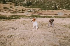Twee puppy zijn in de weide liggend blijven speel royalty-vrije stock fotografie