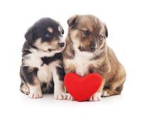 Twee puppys met een stuk speelgoed hart Stock Fotografie