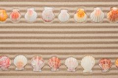 Twee rijen van overzeese shells die op het zand liggen Royalty-vrije Stock Afbeeldingen