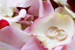 Twee ringen Royalty-vrije Stock Afbeeldingen