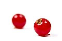 Twee rode aalbessen op een witte achtergrond Royalty-vrije Stock Foto