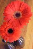 Twee Rode Bloemen Stock Foto's