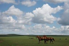 Twee rode paarden Stock Fotografie