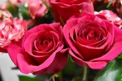 Twee rode rozen Stock Foto