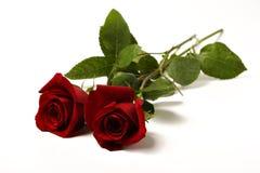 Twee rode rozen Royalty-vrije Stock Afbeelding