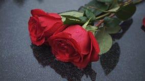 Twee rode rozen op een steen in de regen stock footage