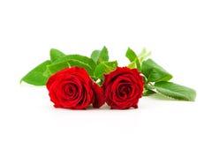 Twee rode rozen op een witte achtergrond Stock Foto