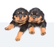 Twee Rottweiler-puppy die van achter lege raad gluren Op wit Royalty-vrije Stock Foto