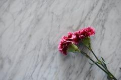 Twee roze anjers op een marmeren lijst stock afbeeldingen
