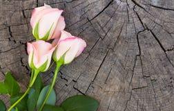 Twee roze rozen op stomp Royalty-vrije Stock Afbeeldingen