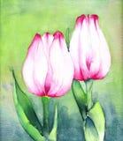 Twee Roze Tulpen Stock Afbeelding