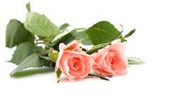Twee rozen Royalty-vrije Stock Fotografie