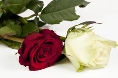 Twee rozen stock afbeelding