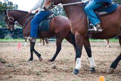Twee ruiters op de paarden Victoria, Australië Stock Fotografie
