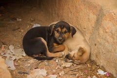 Twee rustende puppy Royalty-vrije Stock Foto